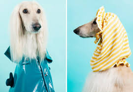 afghan hound in clothes the new exclusive dog à porter dogs u0027 clothing collection by