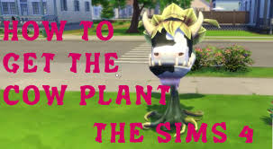 how to get the cow plant in sims 4 youtube