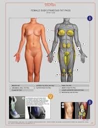 Human Anatomy Reference 107 Best Anatomy Images On Pinterest Anatomy Reference Human