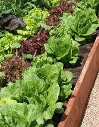 amazing of growing vegetable garden growing vegetables in full sun