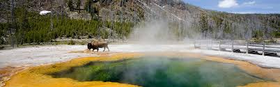 explore yellowstone national park backcountry safaris wildlife tour