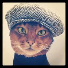 Cat Instagram Presenting U0027rich Cats Of Instagram U0027 Or The Most Spoiled Felines