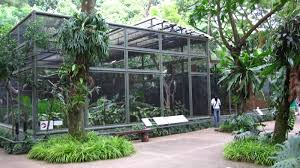 parrot aviary plans bird cages