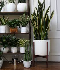 Potted Plant Ideas For Patio by Best 25 White Planters Ideas On Pinterest Home Plants Kitchen