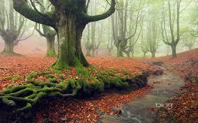 tree moss wallpaper