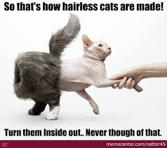 Hairless Cat Meme - hairless cats are inside out cats by natter45 meme center