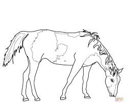 coloring download quarter horse coloring pages quarter horse