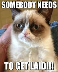 Get Laid Meme - somebody needs to get laid cat meme cat planet cat planet