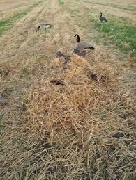 ground field layout hunting blind goose decoy cover hunting