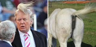 hairstyles for horses the 30 worst hairstyles on the internet strayhair