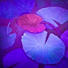 lavender and magenta water lily pads painting by lynne albright
