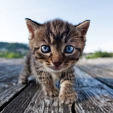 18 drop dead adorable cat names u2013 viralated