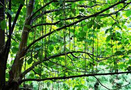 lewis ginter botanical gardens cruising on second fantasy