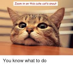 Cute Kitty Memes - zoom in on this cute cat s snout you know what to do zoom meme