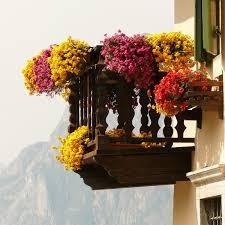 geranien balkon geranien als topfpflanze pflanzen und pflegen