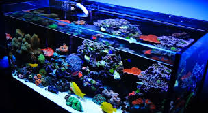 Reef Aquarium Lighting Mad Hatter U0027s Reef Saltwater Aquarium Care And Information