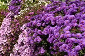Fall Flowers Flower Colors Creations Autumn Flowers Fall Wallpaper Nexus