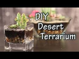diy tutorial on how to make a terrarium with cacti and desert