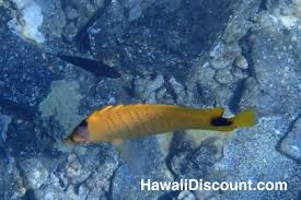 things to do on maui maui snorkeling pacific whale foundation