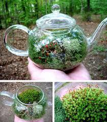 diy terrarium u0026 moss graffiti 28 moss and succulent terrarium garden