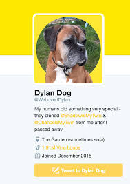 boxer dog vine uk couple clone dead dog live tweet from his twitter account