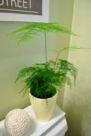 Low Light Indoor Flowers Grow Gorgeous Maidenhair Ferns Indoors With These Tips
