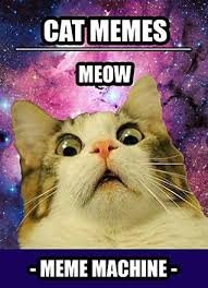 Funny Memes Of Cats - memes 300 cat memes the most hilarious cat meme compilation by