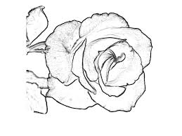 rose coloring pages printable u2014 fitfru style printable rose