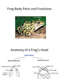 Heart External Anatomy External Anatomy Of A Frog Gallery Learn Human Anatomy Image
