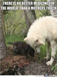 Love My Mom Meme - 45 very funny wolf meme pictures that will make you laugh