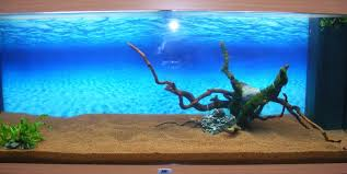 aquascaping layouts with stone and driftwood suggestions for layout uk aquatic plant society