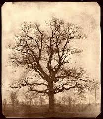 amazing ideas oak tree