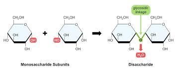 sugar subunits bioninja