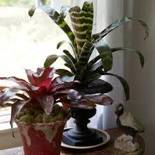 10 hardy houseplants anyone can grow with ease rodale u0027s organic life