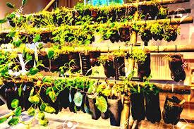 100 vegetable garden using plastic bottles diy wine bottle