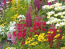 Summer Gardening - tips for planting a summer garden saga