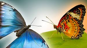 butterfly in epic slow motion slo mo 22 earth unplugged youtube