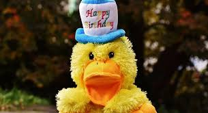 free photo birthday congratulations duck free image on
