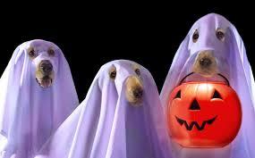 Halloween Safety Lights by Halloween Pet Safety Tips U2014 Dan U0027s Dog Walking And Pet Sitting