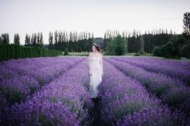 woodinville lavender perfect outdoor wedding venue u0026 event venue