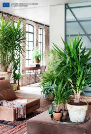 Large Indoor Plants 20 Best U0026yucca Images On Pinterest Yucca Plant Jungles And Plants