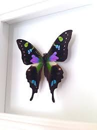 butterfly gifts real butterfly taxidermy butterfly gifts handmade