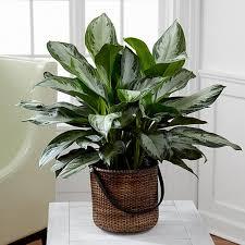 indoor flower plants indoor plant delivery service by ftd