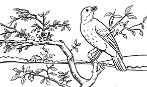 landscapes to draw to draw a bird in a tree in front of rolling