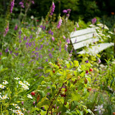 english wild garden stock photo image of nature floral 67588712