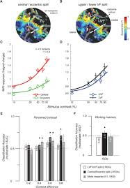 decoding working memory of stimulus contrast in early visual