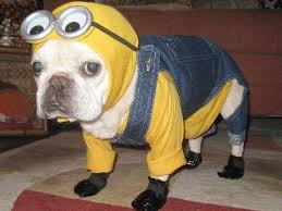 Bulldog Halloween Costumes 30 Halloween Dog Costumes Put Smile Face