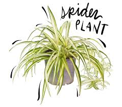 the 7 best plants for your cubicle u2013 the lily