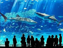 japanese aquarium top ten coolest aquariums all aquarium info where to buy garra