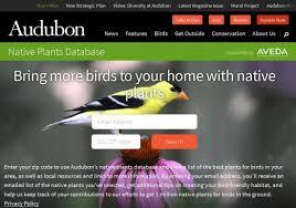 bird friendly native plants audubon black hills audubon society using native plants to fight climate